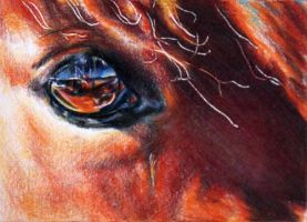 Skylight - horse eye by crystalcookart
