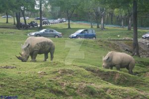 Rhinos and Cars by Zuberiuth