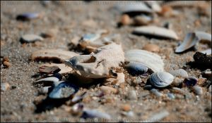 Washed Ashore I by mydigitalmind
