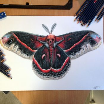 Moth pencil Drawing by AtomiccircuS