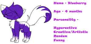 Blueberry's ref by PearlTheKitty2012