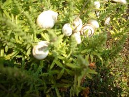 Snails on plants by WolfDemonG