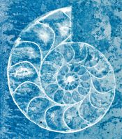 Spiral Ammonite Sketch - Exclusive Premade Stock by somadjinn