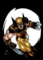 wolverine n color by Kid-Destructo