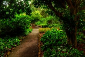 Geelong Botanical Gardens 2 by daniellepowell82
