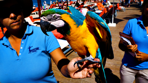Mexico : Parrot by Starshadowx2
