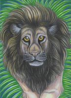 African Lion by Eviecats