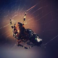 spider swing by ssilence