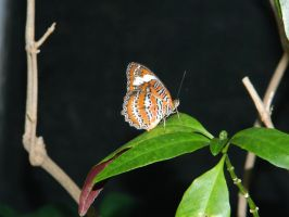 Butterfly 002 - HB593200 by hb593200