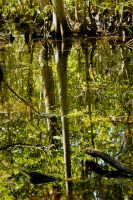 Moccasin slough tree and water by drewii57
