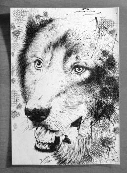 Wolf by PoisonIky