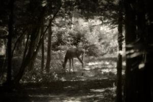 Summer Buck 2 by S-H-Photography