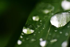 drops I by xxAnnieMxx