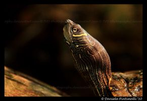 Turtle Portrait by TVD-Photography