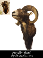Mouflon head by Brizzolatto55