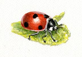 Watercolour Practice - Ladybug by Ninelyn