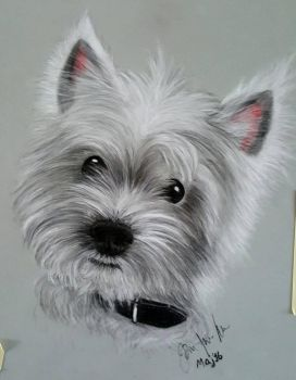 Westie by Sassis