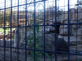 Folsom City Zoo Photo Series 7 by lilly-peacecraft