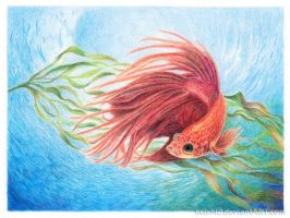2013-01-14 WIP Fish 60 by kelch12