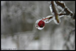 Ice Berry by Nariane