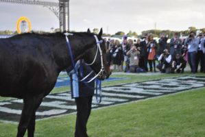 Black Caviar (note press photographers) by MorganaMagorian