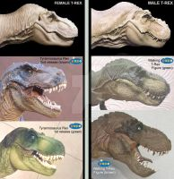T-Rex -- Male x Female - papo figures by Mechanic-Star