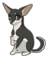 Chihuahua commission 3 by Sugarcup91