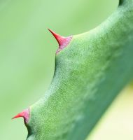 Thorns by publicstock