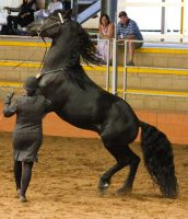 STOCK - 2014 Andalusian Nationals-212 by fillyrox