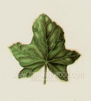 Ivy leaf by WildWoodArtsCo