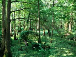 Green Swamps by rhbrown