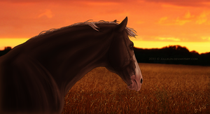 Fields of Gold by Jullelin