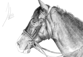 Horse Sketch for Practice by Tokratan