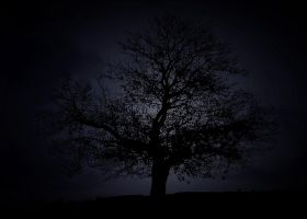 tree by lisans