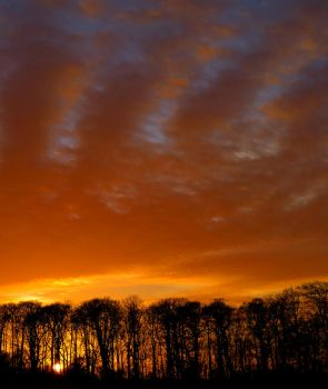 Sunset Behind The Trees by cloud-chaser