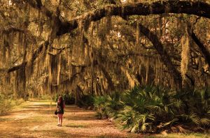 Under the Spanish Moss by Enkased