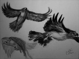 30DDC: Day 2, Fav Animal-Hawks by Kixet