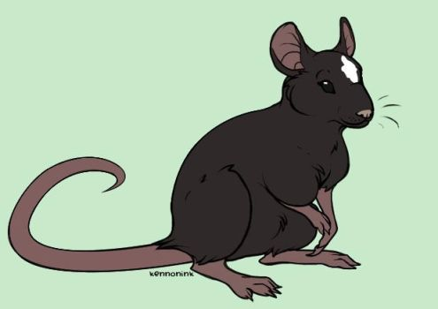 me as A Rat by DayDreamPrincess