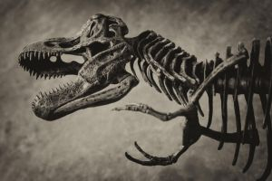 T-Rex Skeleton (Antiqued) by collector007