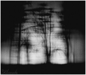 Enrooted by Salvas