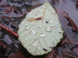 A dew covered leaf by TMNT224