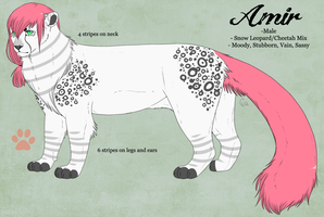 amir ref by CitruShark