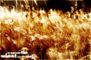 Wheat From The Chaff by coxao