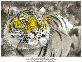 Masked Tiger by Nicole-Marie-Walker