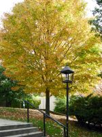 Golden Tree by Yve4882