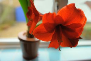 The Big Red Flower by WestLothian