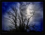 Dead Branches by CanonSX20