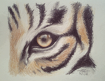 Day 10: The Eye of the Tiger by Kitty-xx