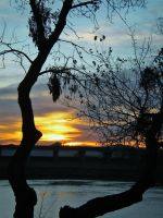 Sunset in the Tree by Marilyn958