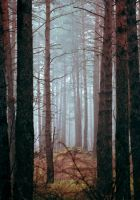 Mist in the Forest VI by NorthernLand